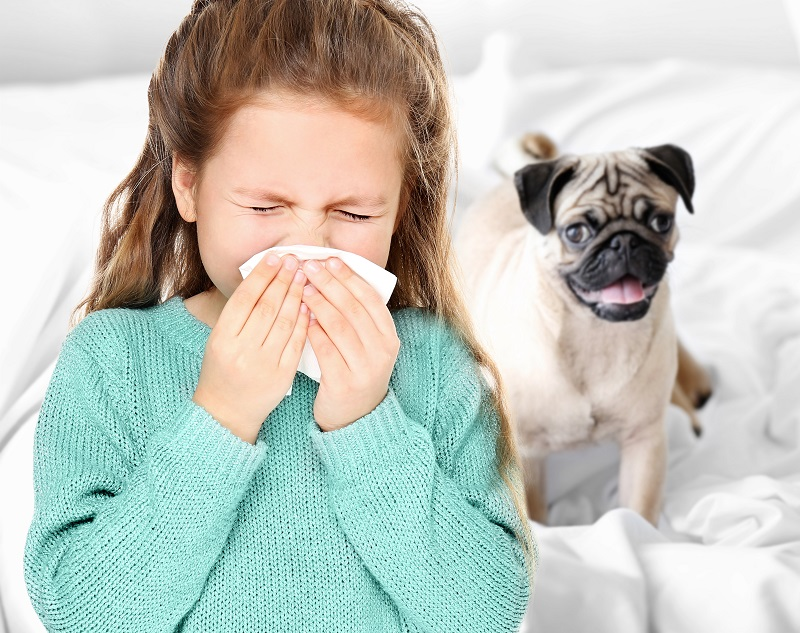 Pet Allergies - How to cope out with them