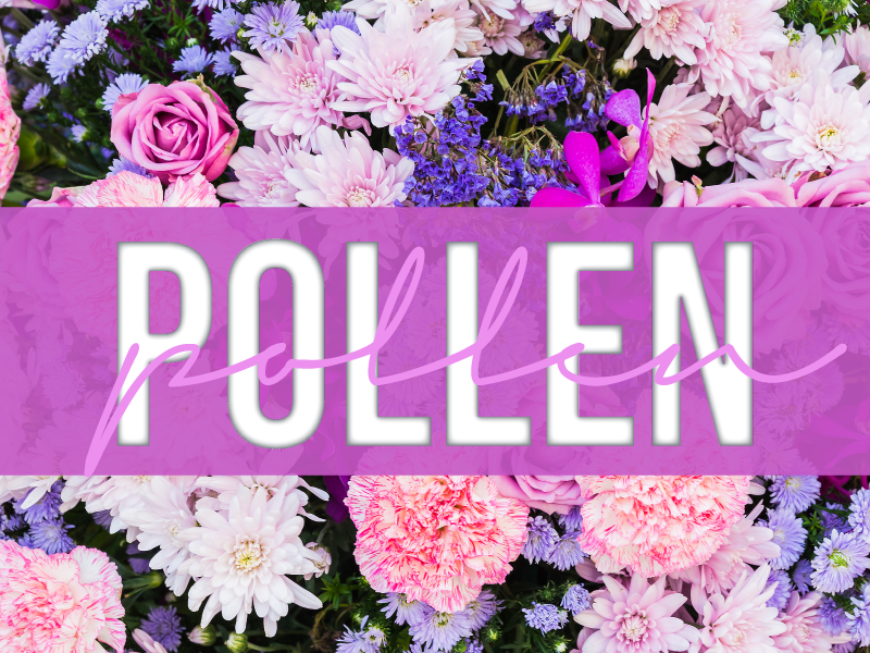 POLLEN! Know why it is harmful to respiratory health