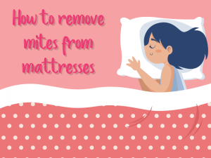 How to Remove Mites from Mattresses